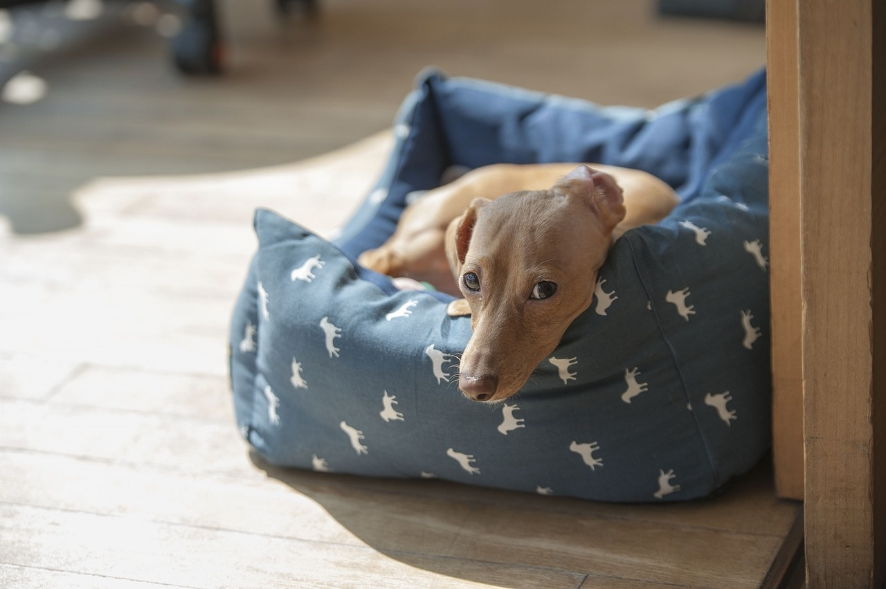 pet bed for dogs