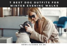 7 Best Dog Outfits For Winter Evening Walks