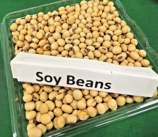 Is-soy-protein-good-and-how-healthy-is-soy-protein-in-protein-shakes-and-soy-milk